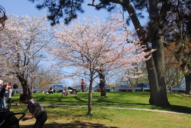 30 cosas que ver y hacer en Toronto, Canadá 2