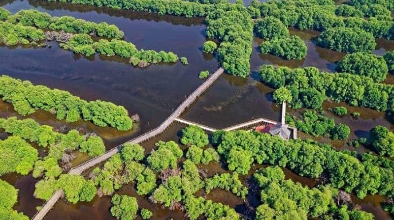 Ecoturismo: definición, origen, historia, principios y beneficios 1