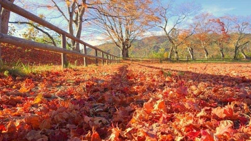 ¿Cuál es la mejor época para viajar a Japón? 6