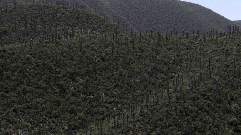 Reserva de la Biósfera Tehuacán-Cuicatlán