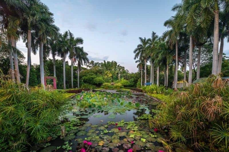 Jardín Botánico Culiacán