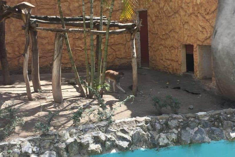 Zoológico Zoochilpan