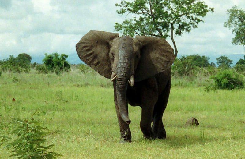 Reserva de elefantes de Maputo