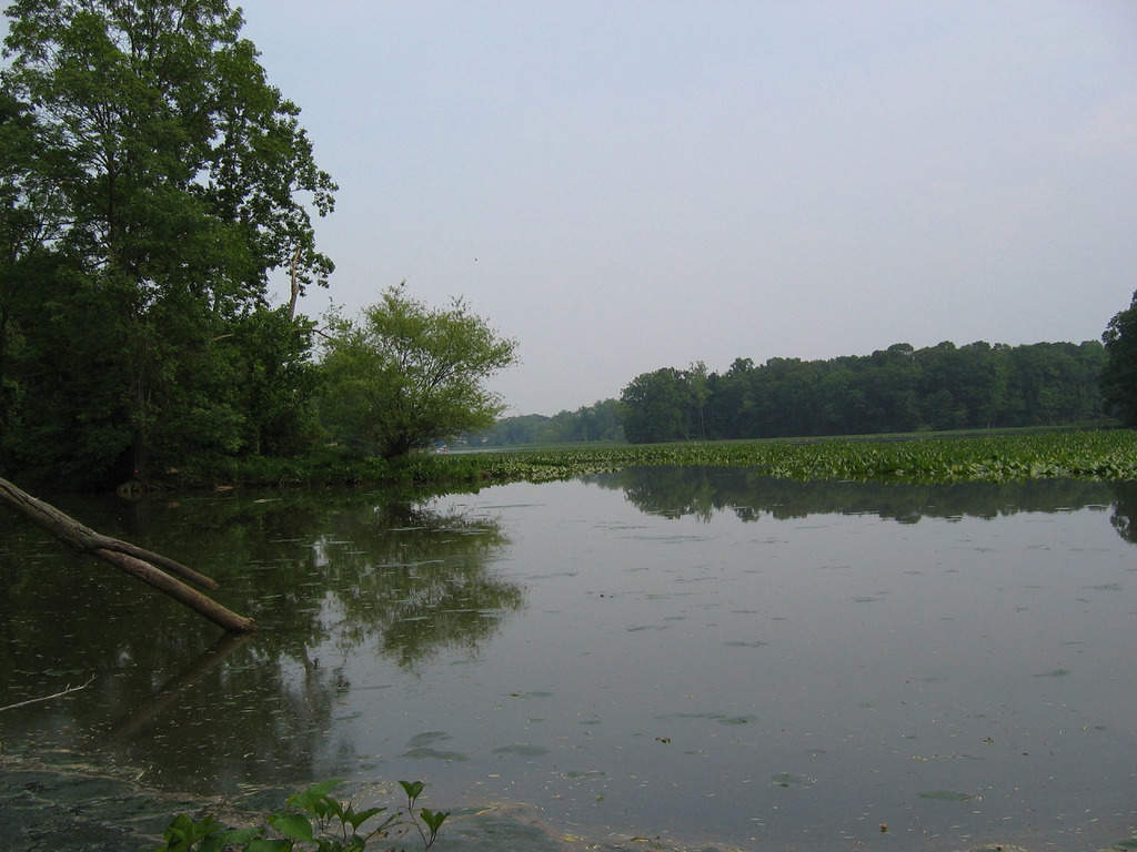 15 lagos en Maryland más impresionantes 7