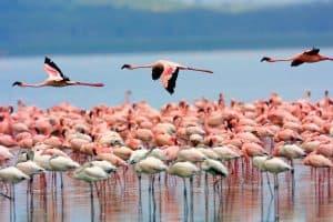 Los 14 principales lagos de África 10