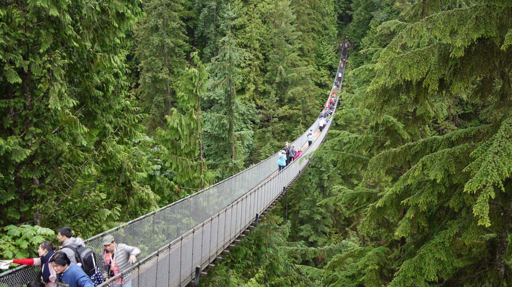 22 lugares de interés que ver en Vancouver, Canadá 11