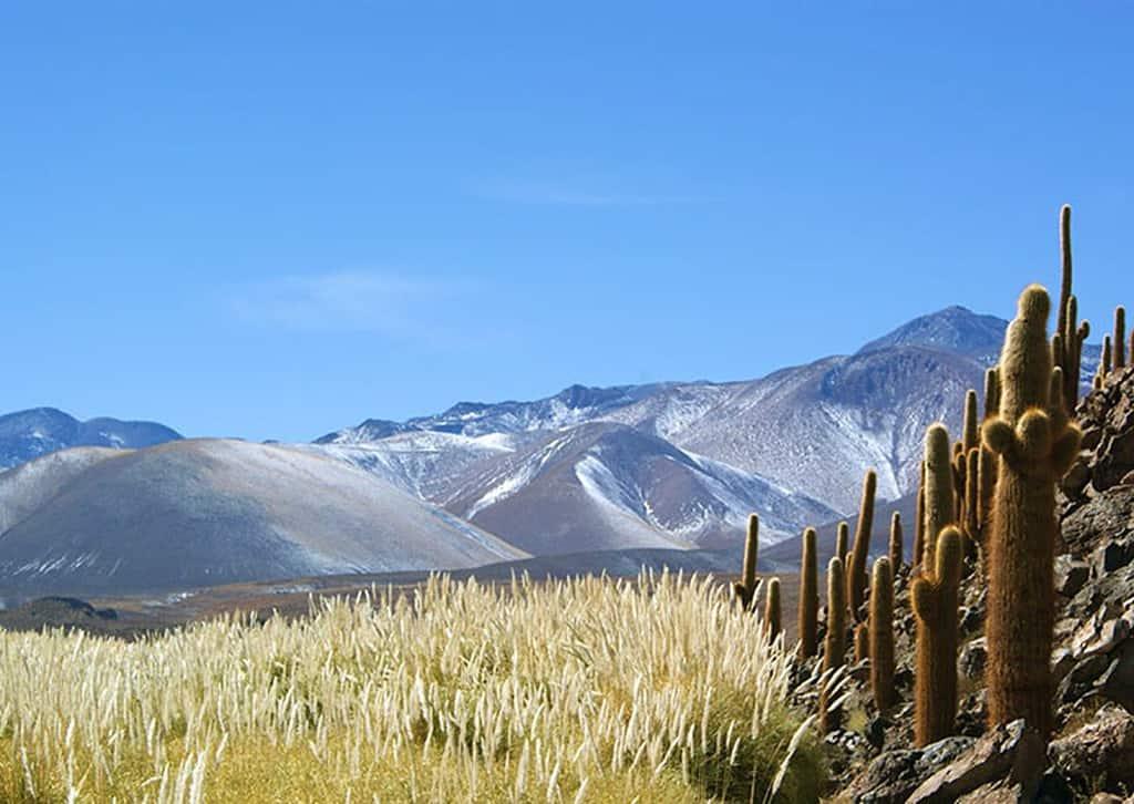 40 curiosidades del Desierto de Atacama 2