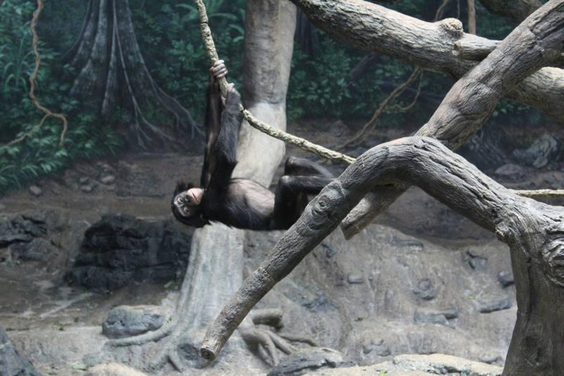 25 mejores zoológicos de Estados Unidos 13