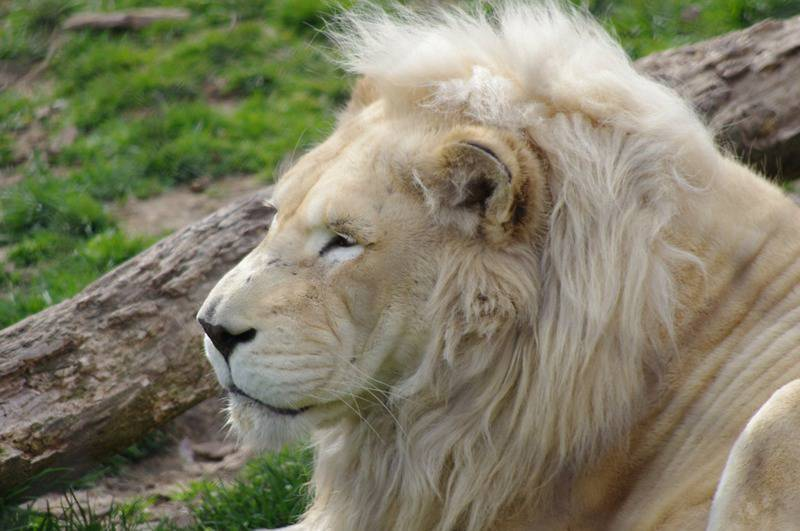 25 mejores zoológicos de Estados Unidos 1