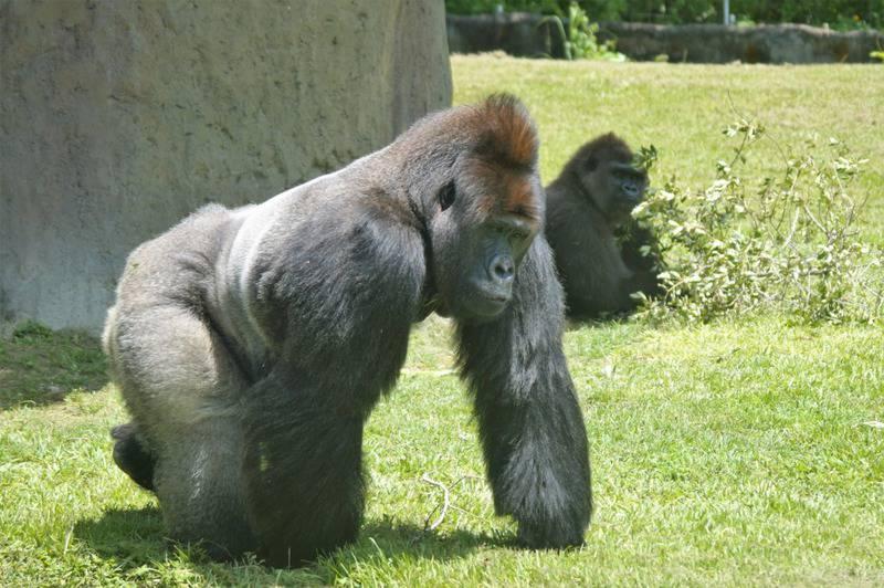 25 mejores zoológicos de Estados Unidos 4