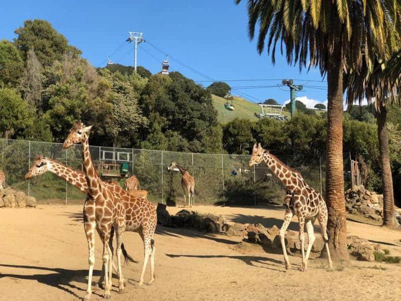 25 mejores zoológicos de Estados Unidos 3