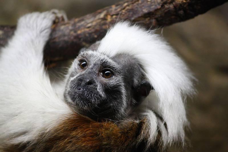 25 mejores zoológicos de Estados Unidos 5