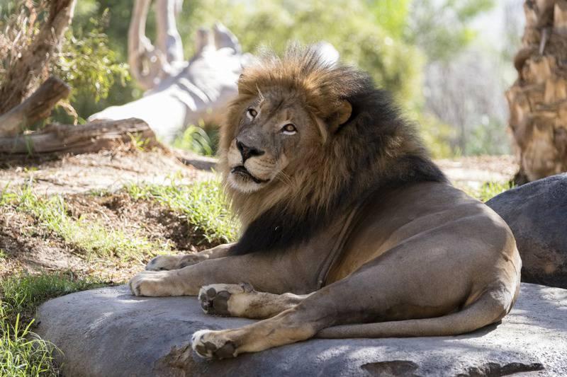 25 mejores zoológicos de Estados Unidos 6