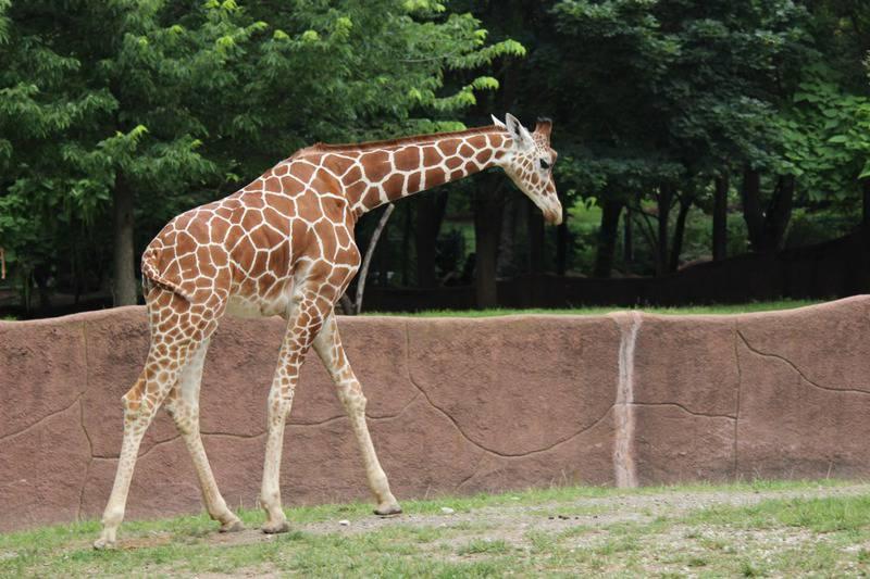 25 mejores zoológicos de Estados Unidos 9