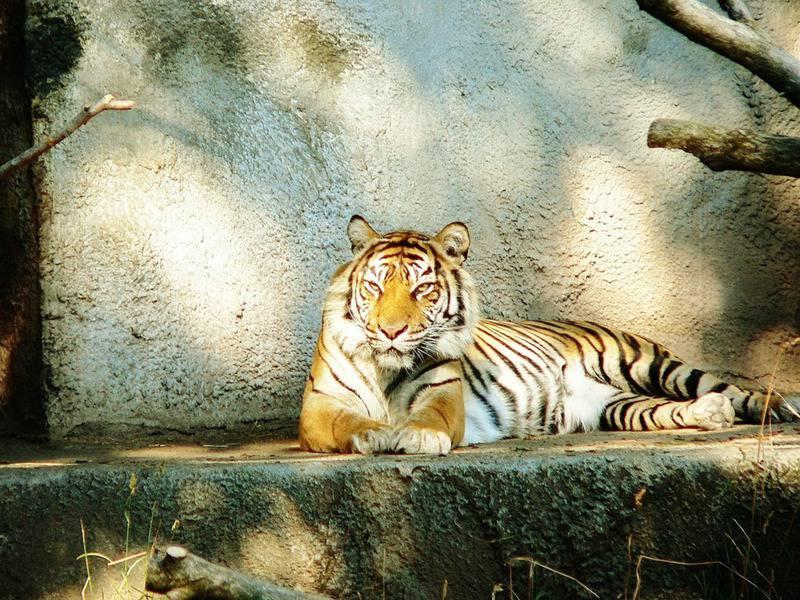 25 mejores zoológicos de Estados Unidos 10