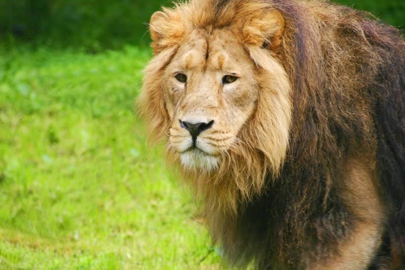 15 mejores zoológicos del mundo 9