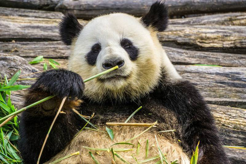 15 mejores zoológicos del mundo 5
