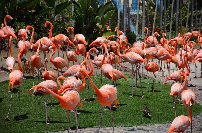 15 mejores zoológicos del mundo 3