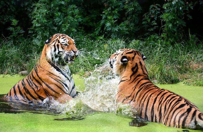 15 mejores zoológicos del mundo 1