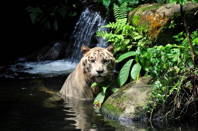 15 mejores zoológicos del mundo 4