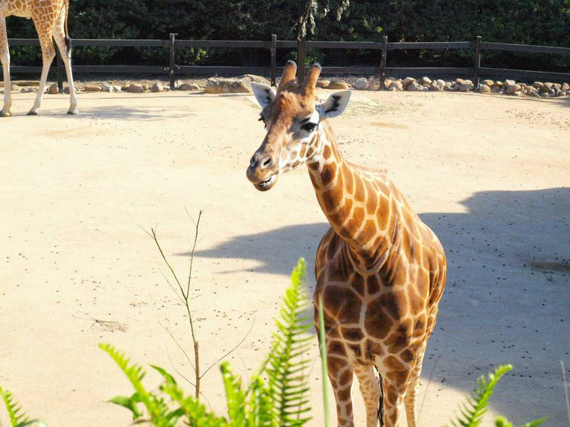15 mejores zoológicos del mundo 8