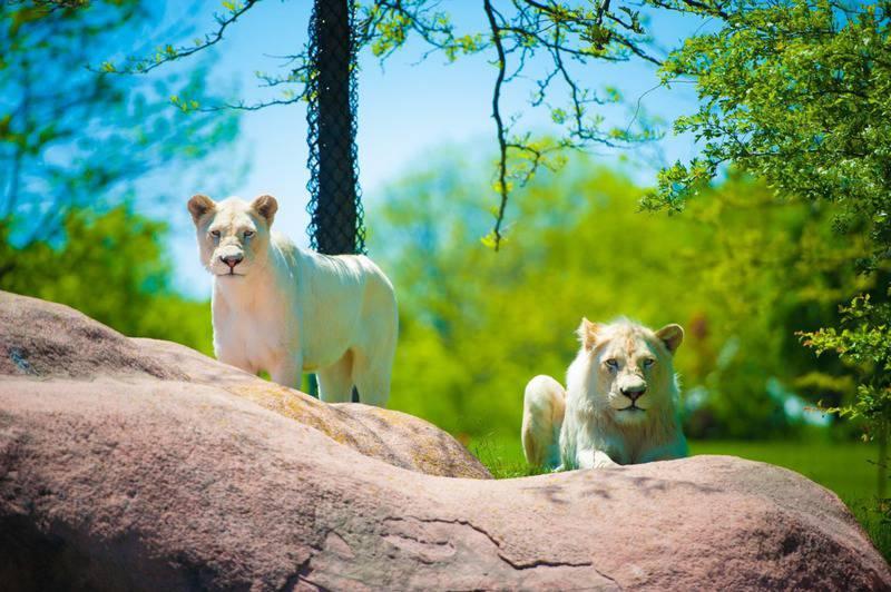 15 mejores zoológicos del mundo 11