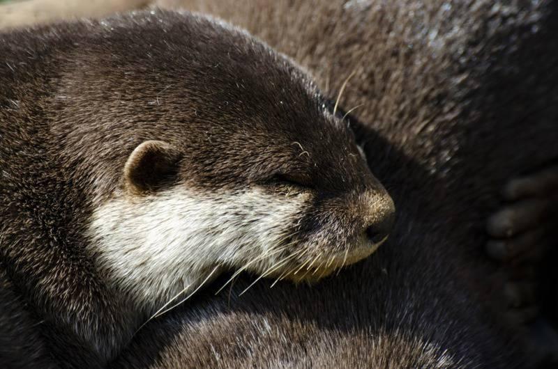 15 mejores zoológicos del mundo 10