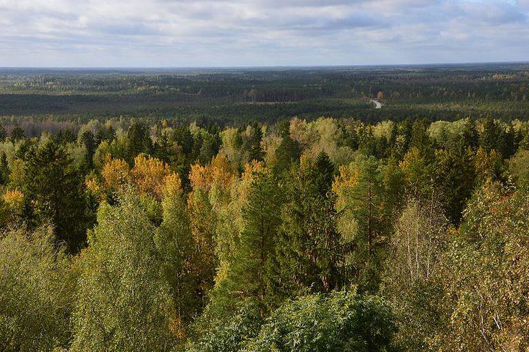 11 lugares que ver en Estonia 7