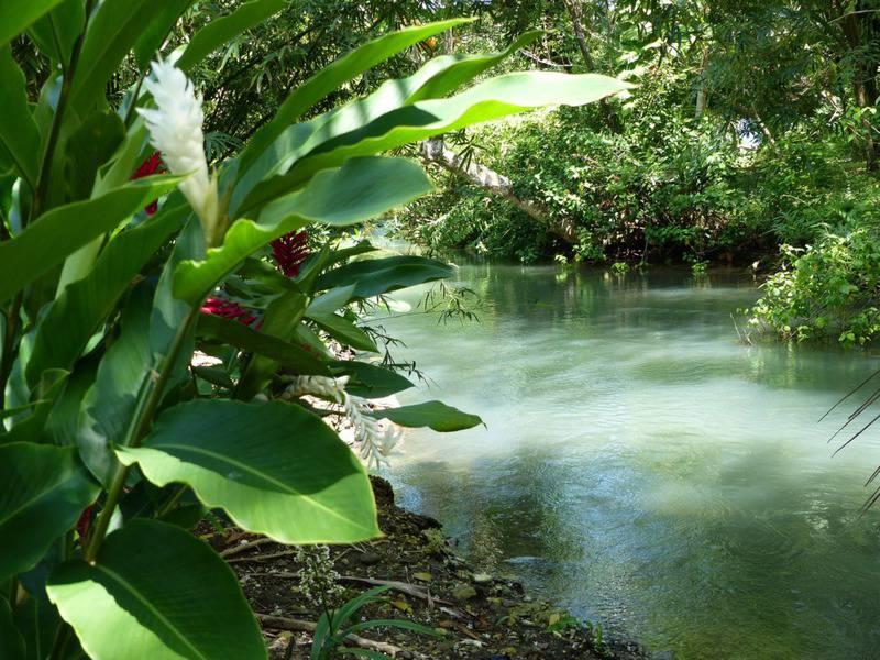 20 lugares que ver en Jamaica 6