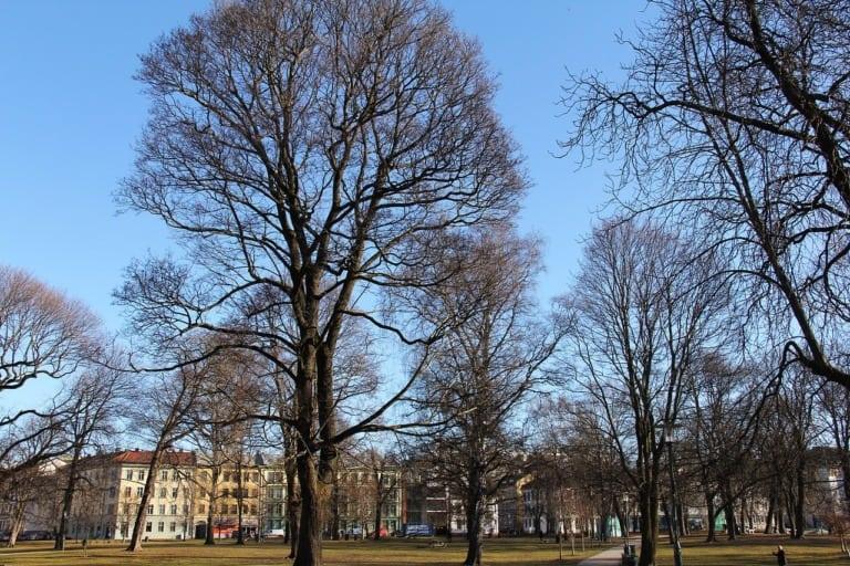 12 lugares que ver en Oslo 6