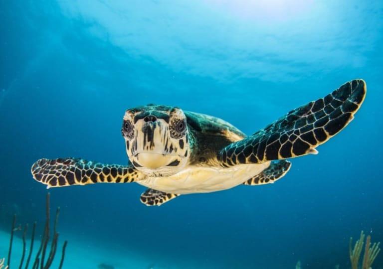 7 mejores playas de Madagascar 2