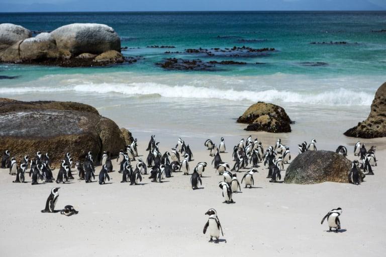 15 mejores playas de Sudáfrica 12