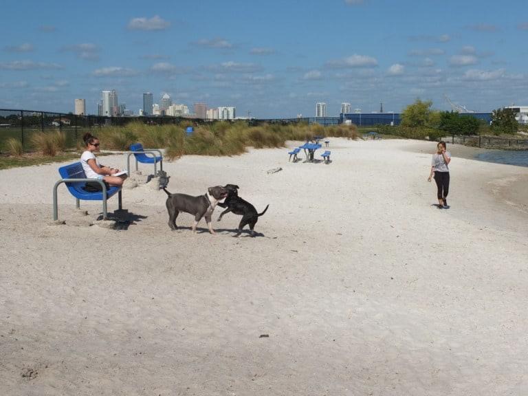17 mejores playas en Tampa 15