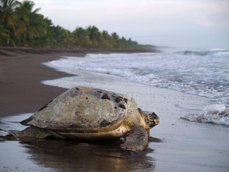 10 lugares que ver en Costa Rica 8