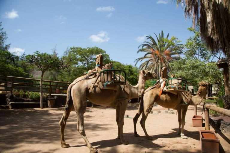 24 lugares que ver en Fuerteventura 20