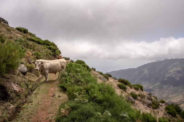 24 lugares que ver en Madeira 21