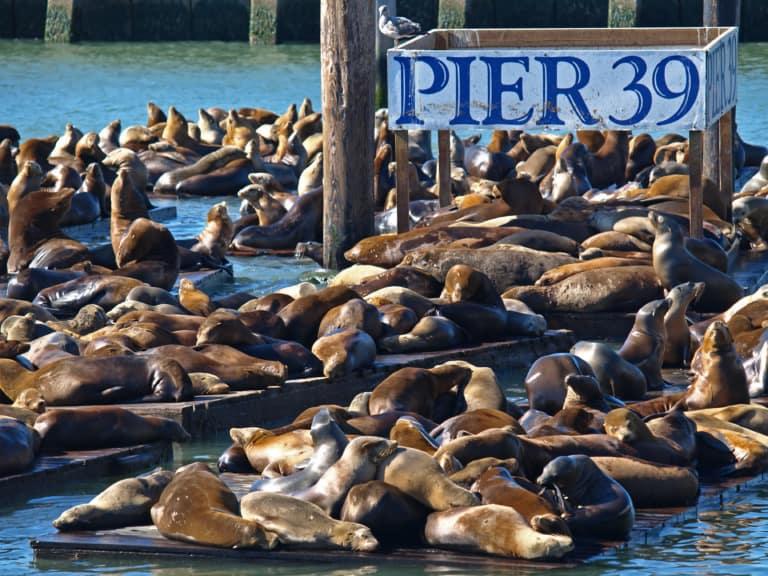 15 lugares que ver en San Francisco 7