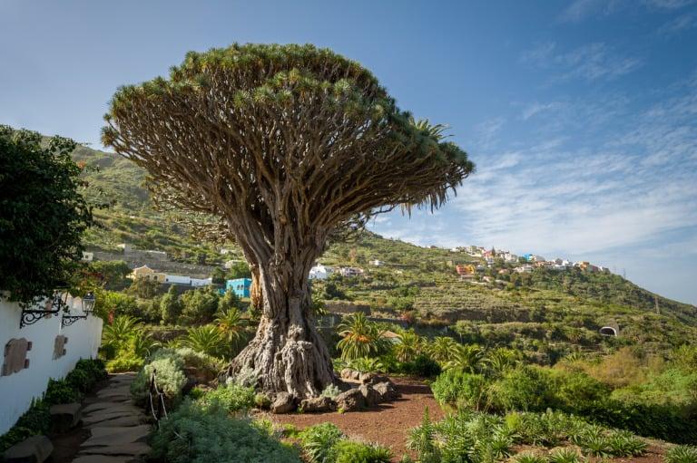 15 lugares que ver en Tenerife 4