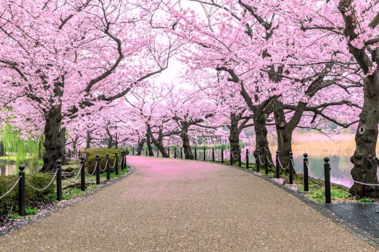 15 lugares que ver en Tokio 10