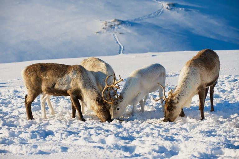 20 lugares que ver en Tromso 15