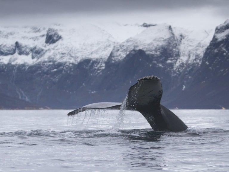 20 lugares que ver en Tromso 4