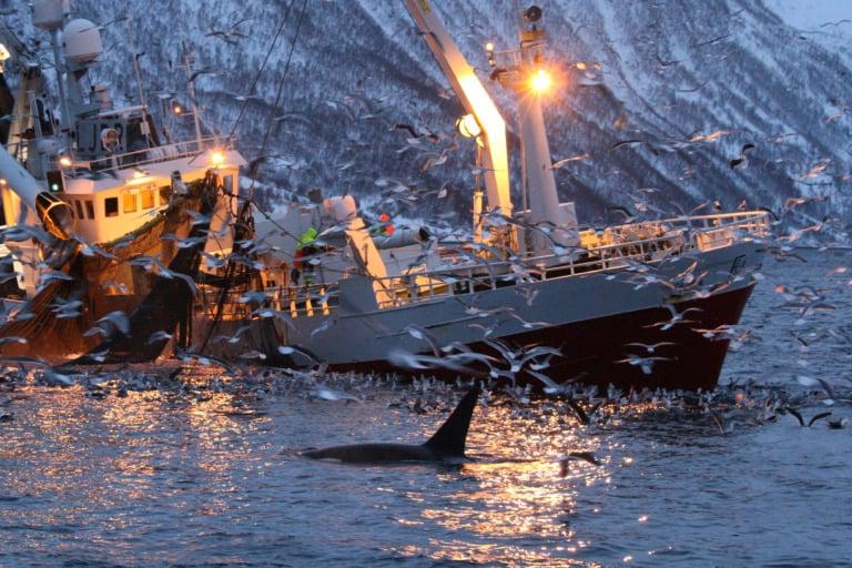 20 lugares que ver en Tromso 20