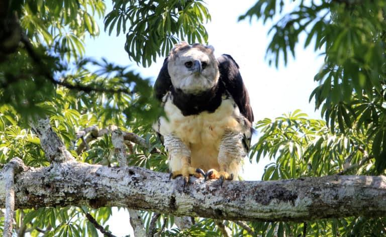 30 animales del Amazonas muy exóticos 13
