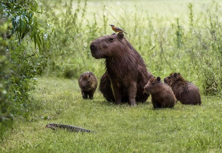 30 animales del Amazonas muy exóticos 4