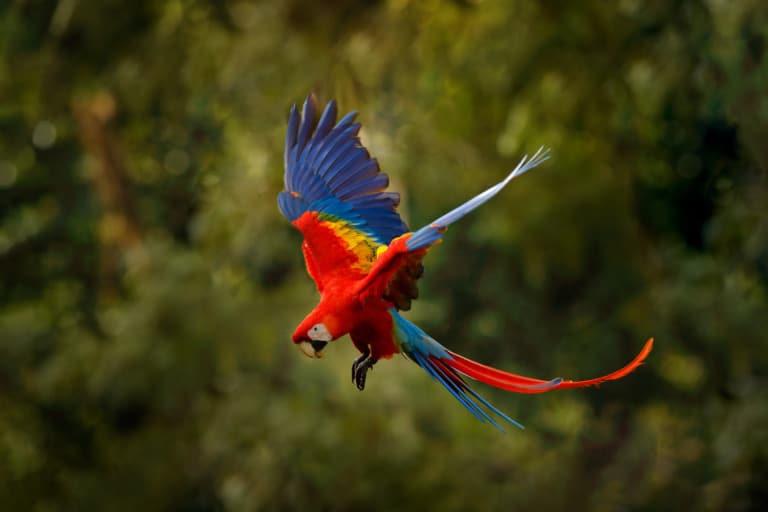 30 animales del Amazonas muy exóticos 12