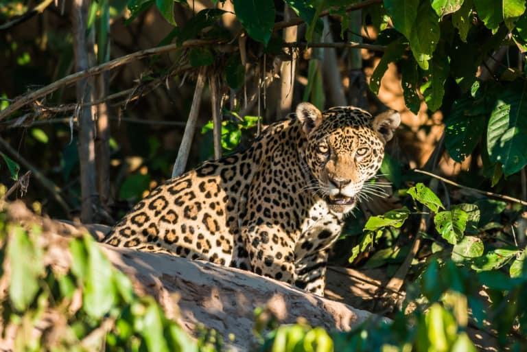 30 animales del Amazonas muy exóticos 1