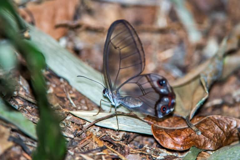 30 animales del Amazonas muy exóticos 27