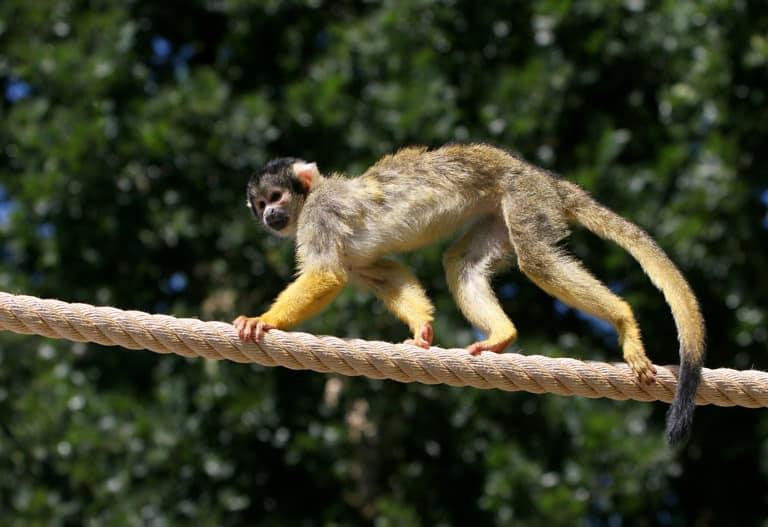 30 animales del Amazonas muy exóticos 5
