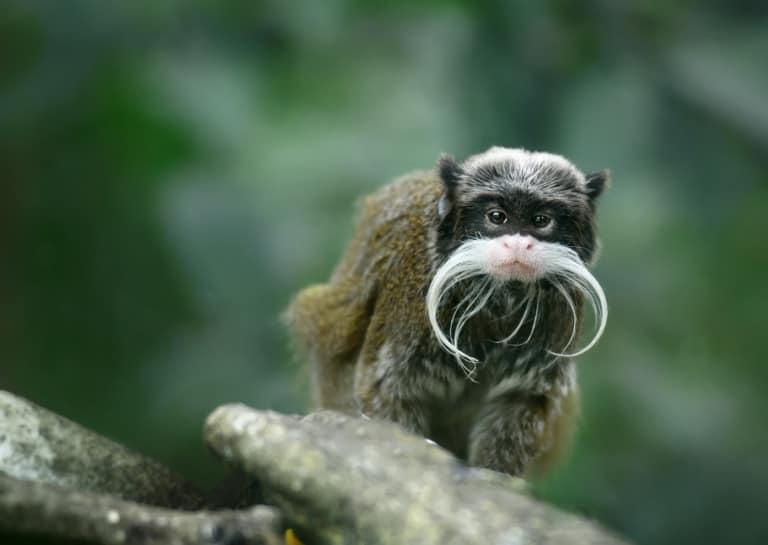 30 animales del Amazonas muy exóticos 10