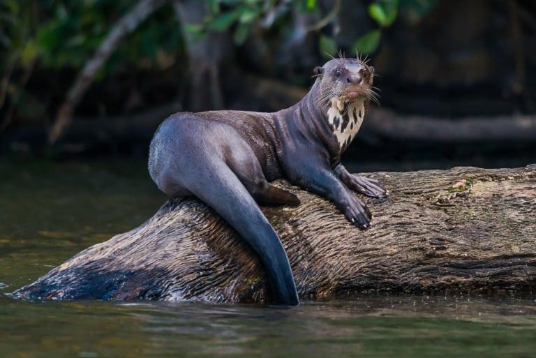 30 animales del Amazonas muy exóticos 2